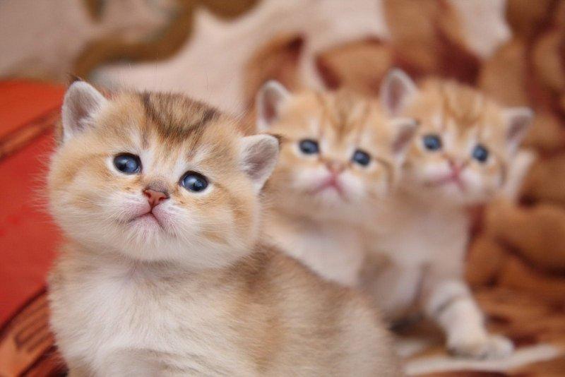 котенка-лучше-приобрести-для-ребенка