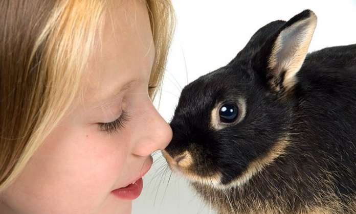 кролик-стоит-ли-его-покупать-ребенку