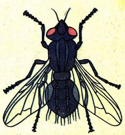 с-насекомыми-в-помещениях